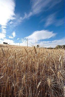 Prestiti agevolati per 95 milioni di euro: 1.400 imprese agricole dell'Emilia-Romagna hanno risposto al bando regionale